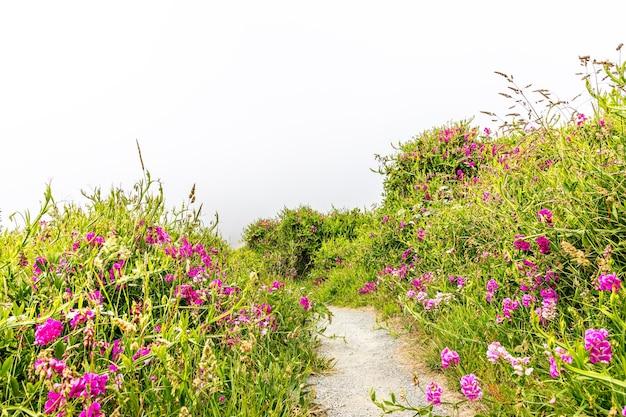 オレゴン海岸の野花の間の自然遊歩道
