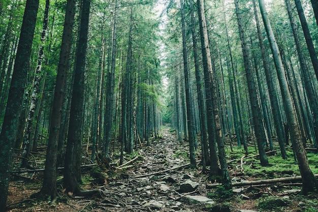 숲에서 자연 나무 통로