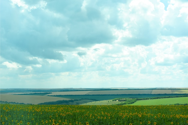 Nature of ukraine. the landscape of ukrainian agricultural fields of summer fields. the farm. fields with corn, wheat.