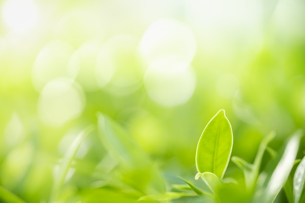 Nature view green leaf on blurred greenery background under sunlight with bokeh and copy space.
