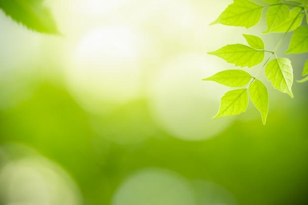 自然は、ボケ味とコピースペースと日光の下でぼやけている緑の背景に緑の葉を表示します。