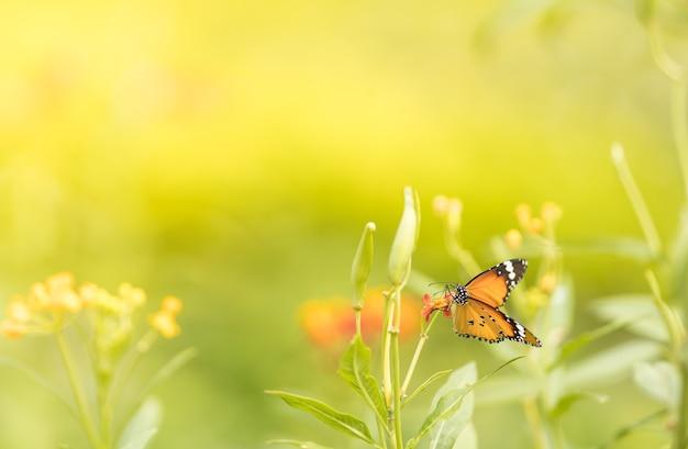 緑の自然のぼやけた背景に美しいオレンジ色の蝶の自然ビュー