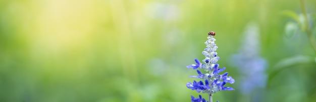 Вид природы маленькой божьей коровки на фиолетовом цветке лаванды с зеленой природой размытым фоном с копией пространства, используя в качестве фона