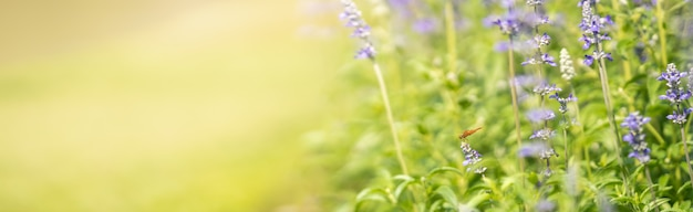 Nature view of orange dragonfly on purple lavender flower with green nature blurred surface with copy space