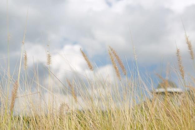 Nature wild grass flower. golden sunset in nature. shallow depth of field.