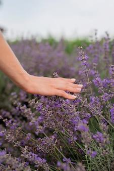 自然。ラベンダー畑でラベンダーの花に触れる女性の手