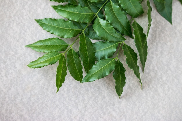 Neem leaves used as ayurvedic medicine