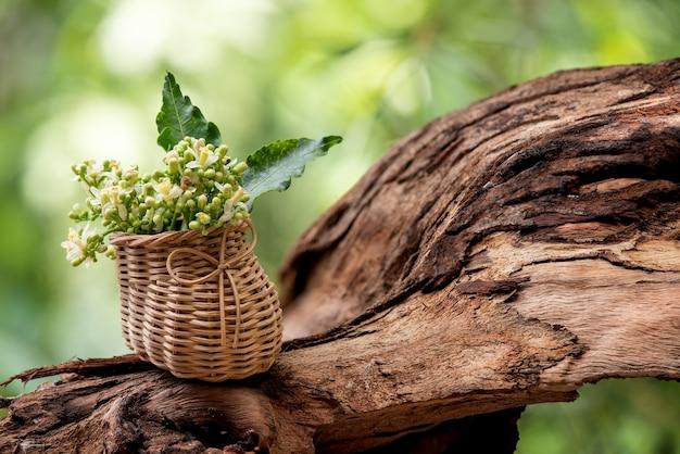 ニームまたはアザディラクタインディカ緑の葉と自然の花。