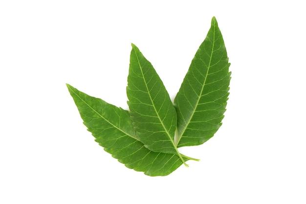 ニームまたはazadirachtaindica緑の葉は、白い背景で隔離。