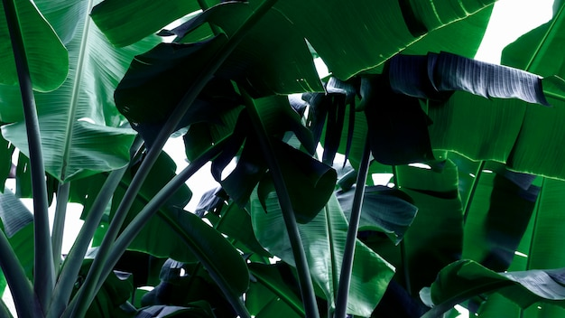 Neon green banana leaves abstract background