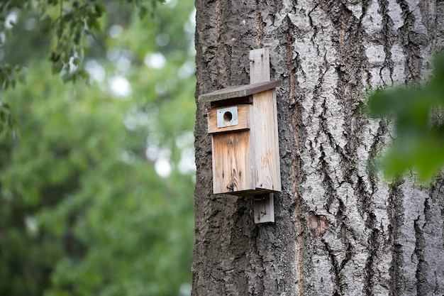 Nest box for a birds in the forest
