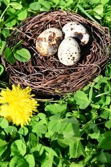 Nest with bird eggs over green bush