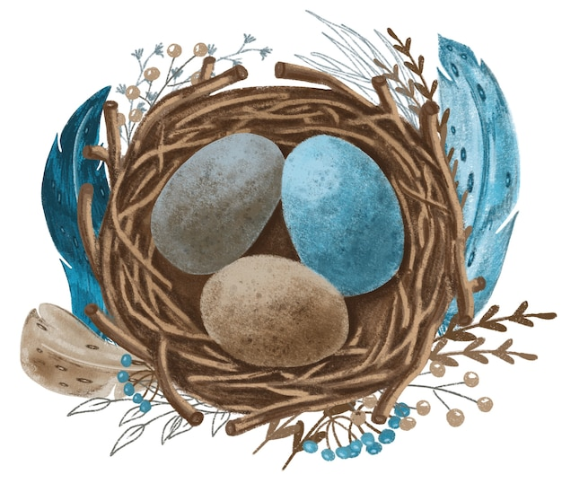 Nest with blue, brown, gray eggs and turquoise feathers, hand drawn illustration