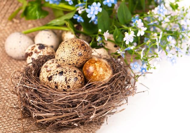白い背景の上の布に卵とワスレナグサの巣