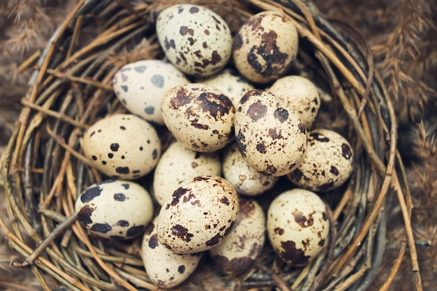Nest with eggs of quails