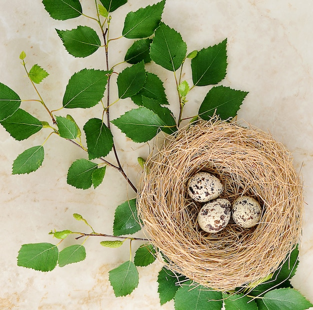 Nest with quail eggs and a birch twig on marble