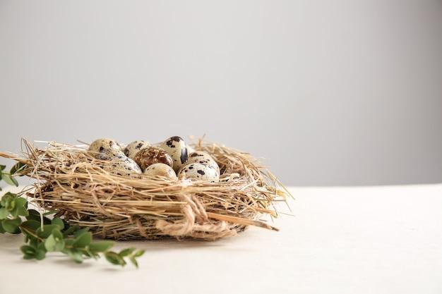흰색 테이블에 원시 메추라기 알과 둥지