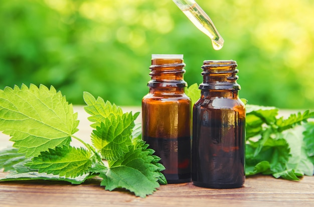Nettle essence oil and fresh branches blooming nettle.