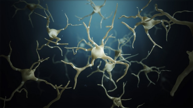 Neuron cells connections