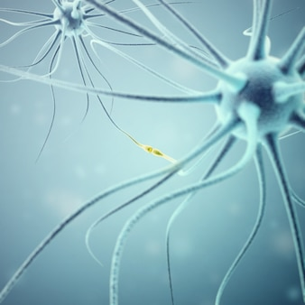Neurons transmission signals in the head