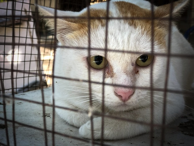 Neutering dogs and cats in world rabies day, surgical sterilization of dogs, cats