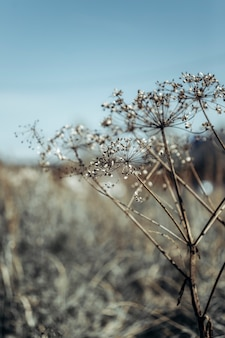 Neutral background of dried flowers