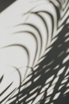 熱帯の椰子の枝のシルエットとニュートラルな花の構成