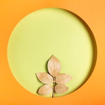 オレンジ色のフレームの中立的な葉