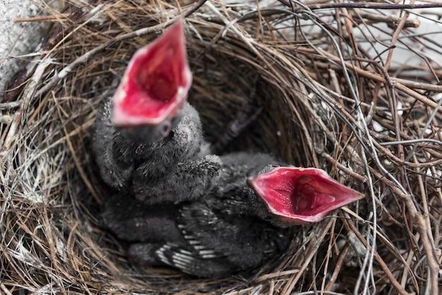 New born couple birds hungry amazing moment