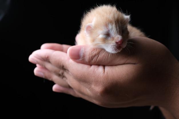 검은 배경으로 손에 자고 새로 태어난 새끼 고양이. 어두운 무디 테마