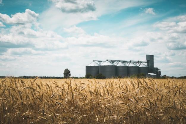 麦畑を背景にした新しい穀物エレベーター