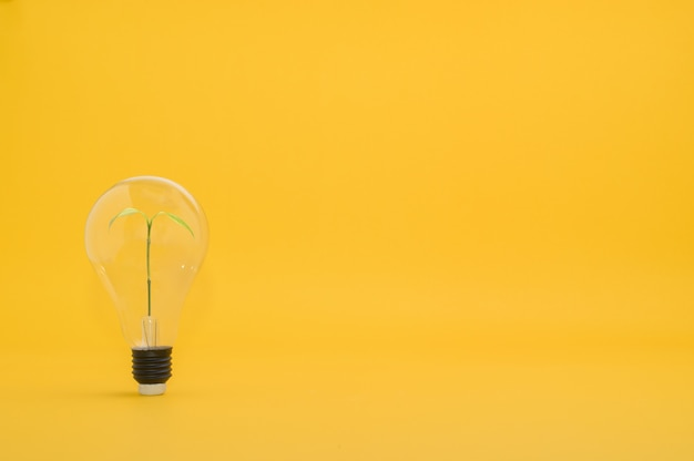 New ideas, growing ideas
