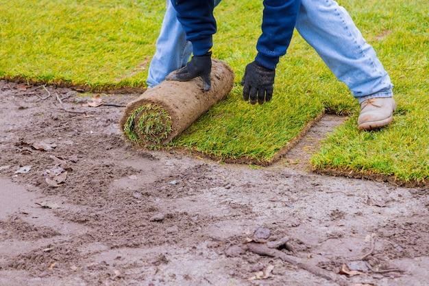 ガーデニングに使用する準備ができている新鮮な芝生の新しい芝生ロール
