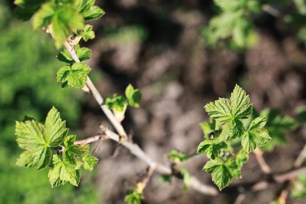 木の春のブランチでの新生活