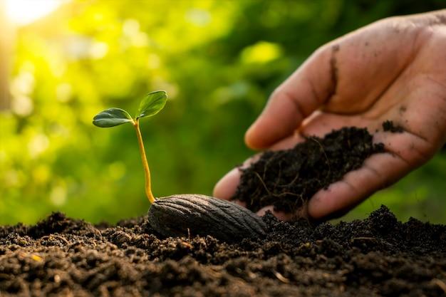 비옥한 땅의 씨앗에서 자라는 새로운 생명 식물과 식물을 돌보는 농부의 손