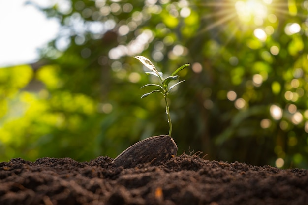 비옥한 땅의 씨앗에서 자라는 새로운 생명 식물, 식물 성장 개념.