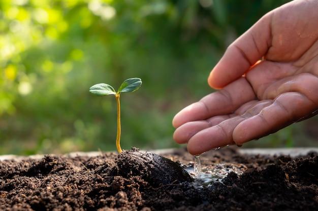 비옥한 토양과 좋은 손에 씨앗에서 자라는 새로운 생명 식물이 식물에 물을 주고 있습니다.