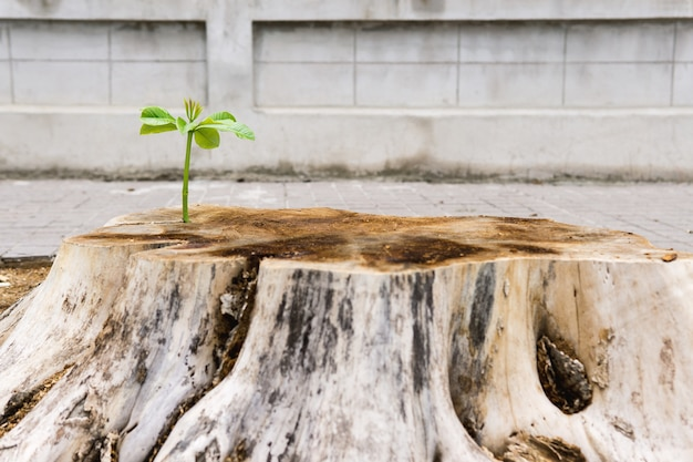 New life with seedling growing sprout of old wood.ecology concept