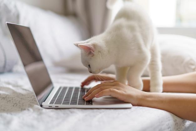 Новая нормальная работа из дома с милым белым котенком британской короткошерстной белой кошки, смотрящим на ноутбук. работаем в интернете или учимся и учимся пока. внештатная работа, бизнес и работа на дому концепция