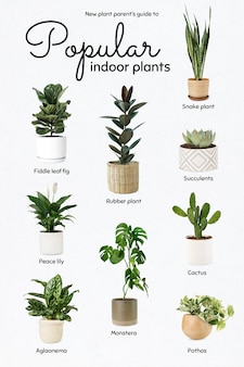 New plant parents guide to popular indoor plants