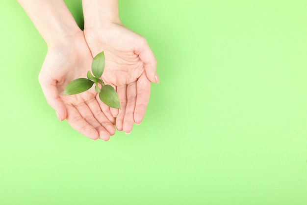New sprout in female hands top view place for text earth day concept
