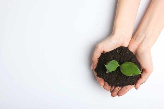 Новый росток в женских руках место вид сверху для текста концепции дня земли
