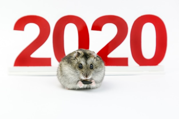 New year. 2020 year of the mouse on the calendar.
