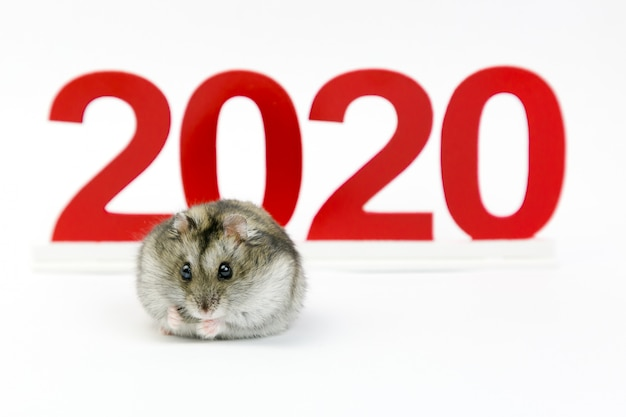New year. 2020 year of the mouse