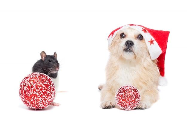 新年とクリスマスのコンセプト