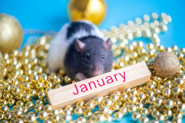 New year card. symbol of new year 2020  rat with  christmas decor golden  baubles on blue  january
