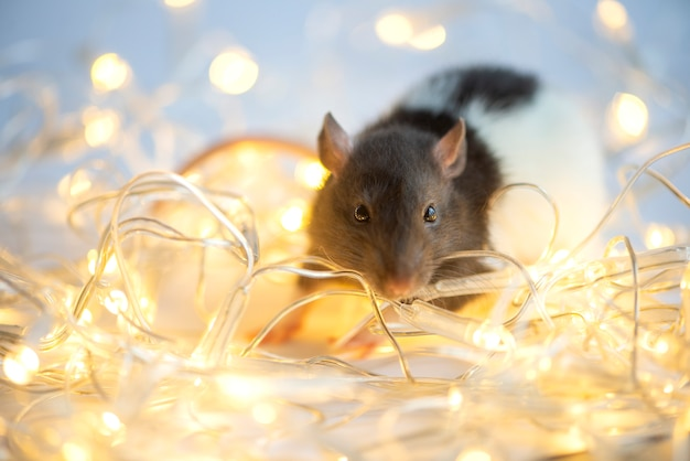 Новогодняя открытка. символ новогодней 2020 крысы на рождественские огни боке