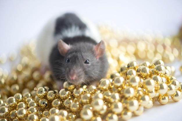 Новогодняя открытка. символ новогодней 2020 крысы с рождественским декором безделушки на белом