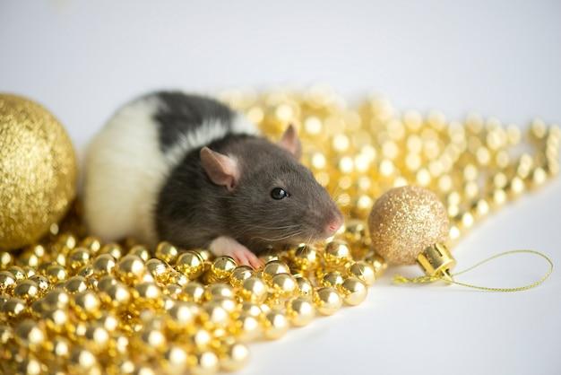Новогодняя открытка. символ новогодней 2020 крысы с рождественским декором золотые безделушки на белом