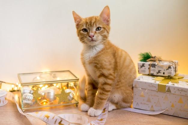 Новый год, рождество кота в золотых пятнах и огней бокен и гирлянды. фото высокого качества